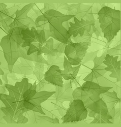 foliage plants leaves background maple maple leaf vector image vector image