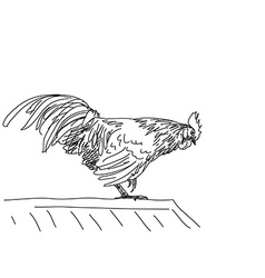 Sketch of rooster vector image