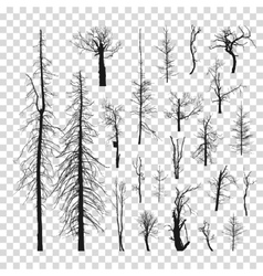 Tree set a transparent background vector image