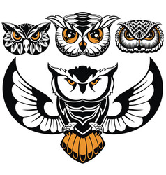 birds owls vector image