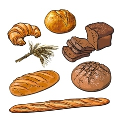 Fresh pastries crisp bread isolated vector