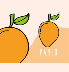 mango fruit tropical fresh natural on colored vector image