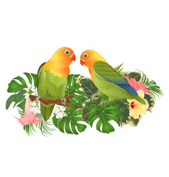 Parrots agapornis lovebird tropical birds vector