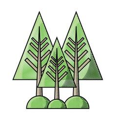 pine trees icon vector image