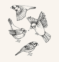 set with different flying and sitting sparrow vector image vector image