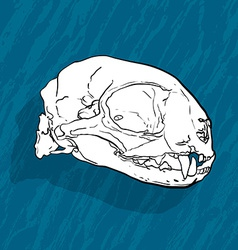 Animal skull with shadow on blue background vector