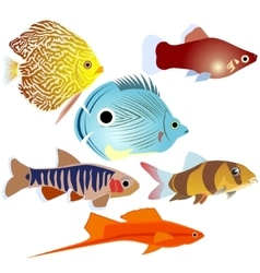 Aquarium fish-3 vector