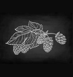 Chalk sketch hops vector