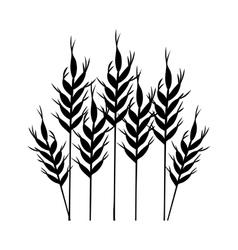 Isolated wheat ear design vector