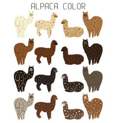 Palette of natural colors of alpaca wool animal vector