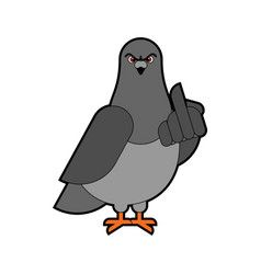 Pigeon shows angry dove aggressive city bird vector