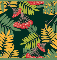 seamless pattern rowan branches with berries vector image