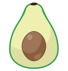 avocado vector image vector image