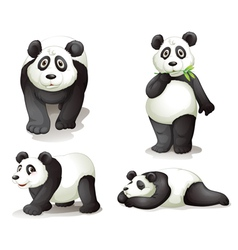 a panda vector image