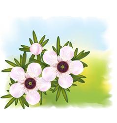 manuka or tea tree vector image vector image