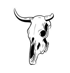 skull of a bull vector image