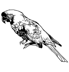 Black and White Parrot vector image