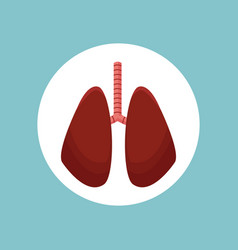 Lungs organ human image vector