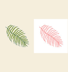 palm plant tropical or exotic leaves and leaf vector image