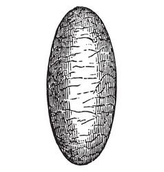 Parasite wasp cocoon vintage vector