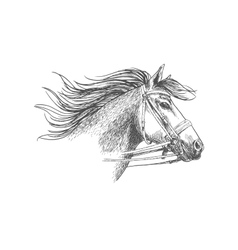 Sketch of horse head in a bridle vector