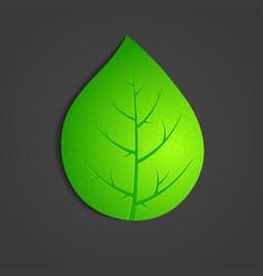 green leaf on dark background vector image