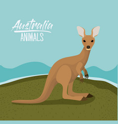 australia animals poster with kangaroo outdoor vector image