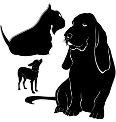 basset dog chihuahua scotch terrier vector image
