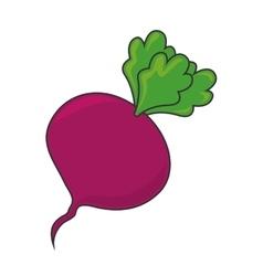 Beet beetroot vegetable vector