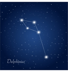Delphinus constellation vector