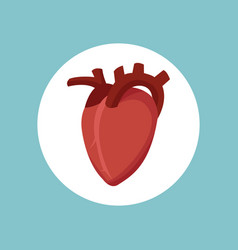 heart cardology health image vector image