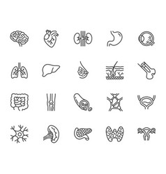 organs anatomy flat line icons set human bones vector image
