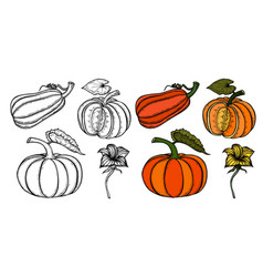 Pumpkin autumn collection vector