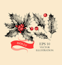 set holly leaves and berries vector image