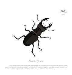 Detailed drawing of beetle deer vector image vector image