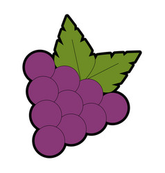 grapes fresh fruit icon vector image