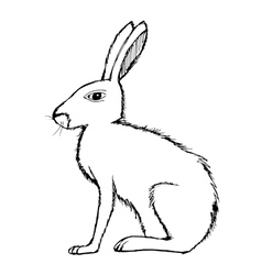 Hare vector