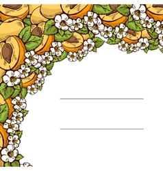 Pattern apricots with flowers and leaves vector image