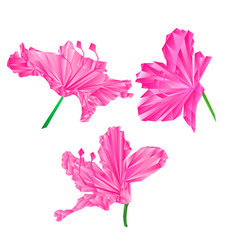 Rhododendrons flowers pink simple polygons vector