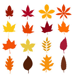 set of autumn leaves icons isolated on white vector image