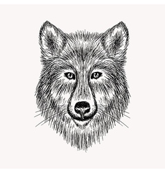 Sketch realistic face Wolf Hand drawn in Doodle vector image