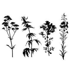 medical herbs set vector image