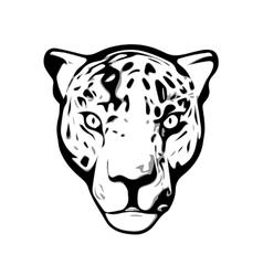 Head of Jaguar vector image