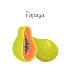 papaya exotic fruit isolated papaw pawpaw vector image