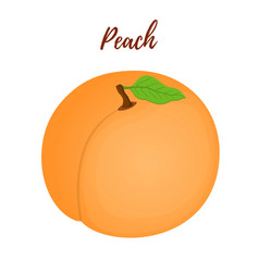 peach with leaffruit in cartoon flat style vector image