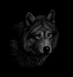 Portrait of a wolf head on a black background vector