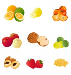 japanese fruit vector image vector image