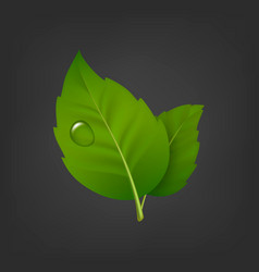 Background with green leaf pair and drop of vector