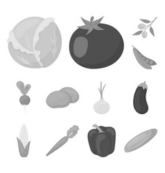different kinds of vegetables monochrome icons in vector image