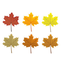 Set of colorful autumn leaves cartoon and flat vector